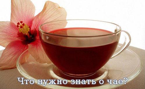 Что нужно знать о чае?