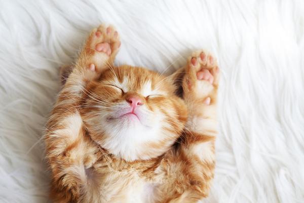 Кошки и их болезни. Симптомы, уход, лечение